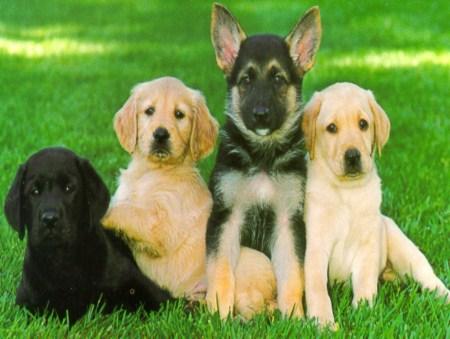 Seeing Eye Dogs Uk